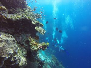 Scuba diving Borneo
